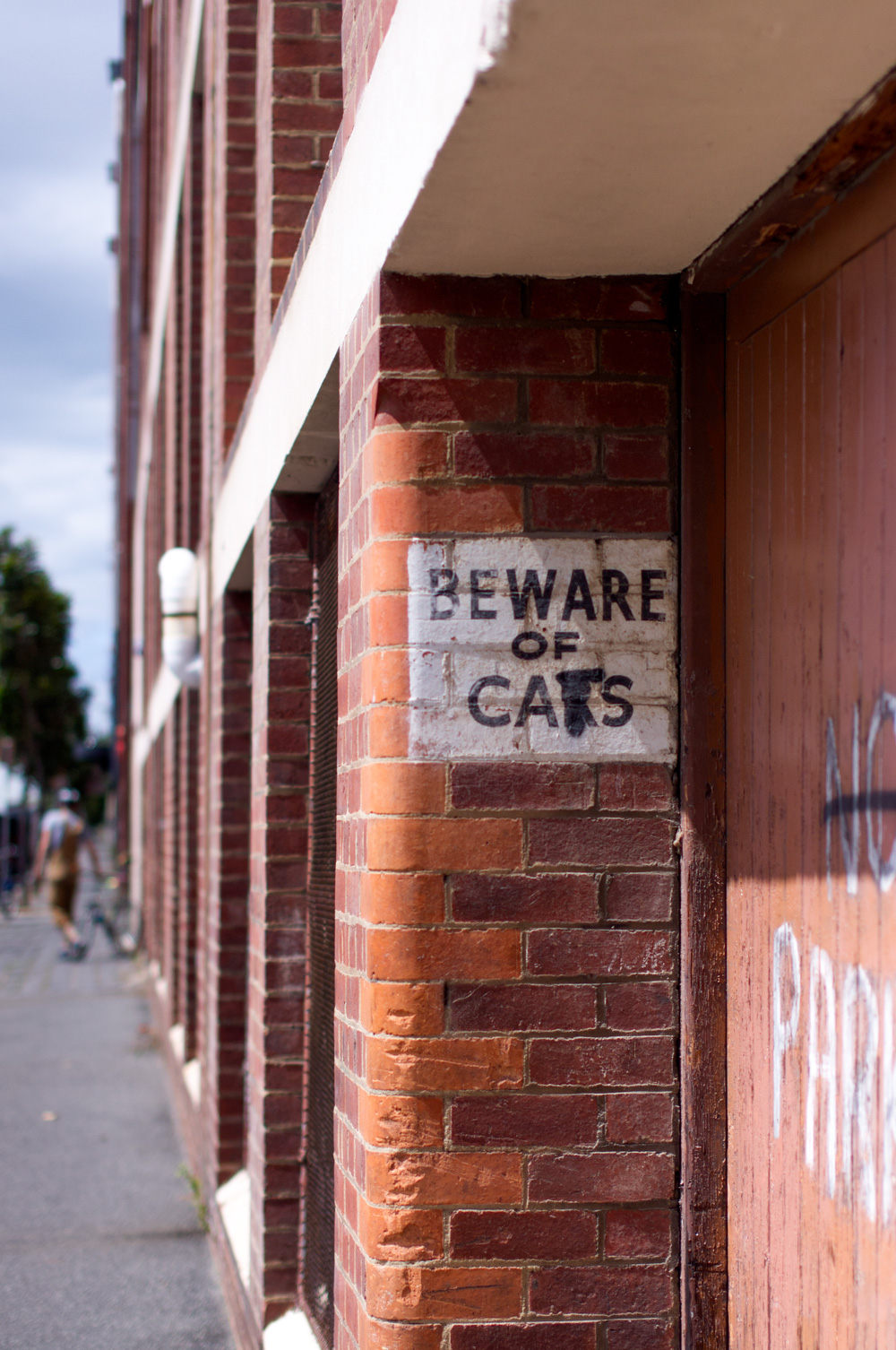 Beware of cats. Photo by Susan Fitzgerald.