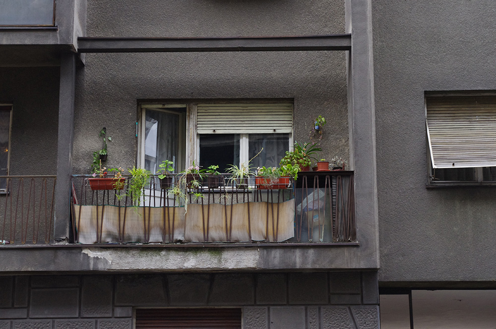 Balcony plants in Serbia