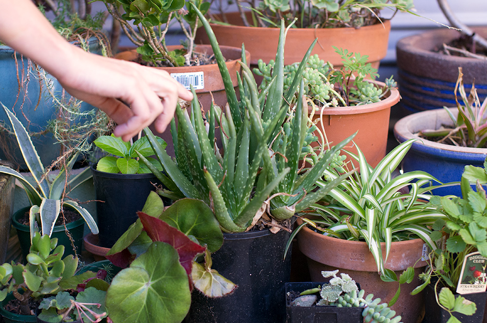 What a green thumb! Esther's garden has so many succulents and other plants, many of which she's propagated herself.