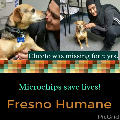 Microchips Save Lives Fresno Humane Animal Services - Dog passes owner returns 2 years