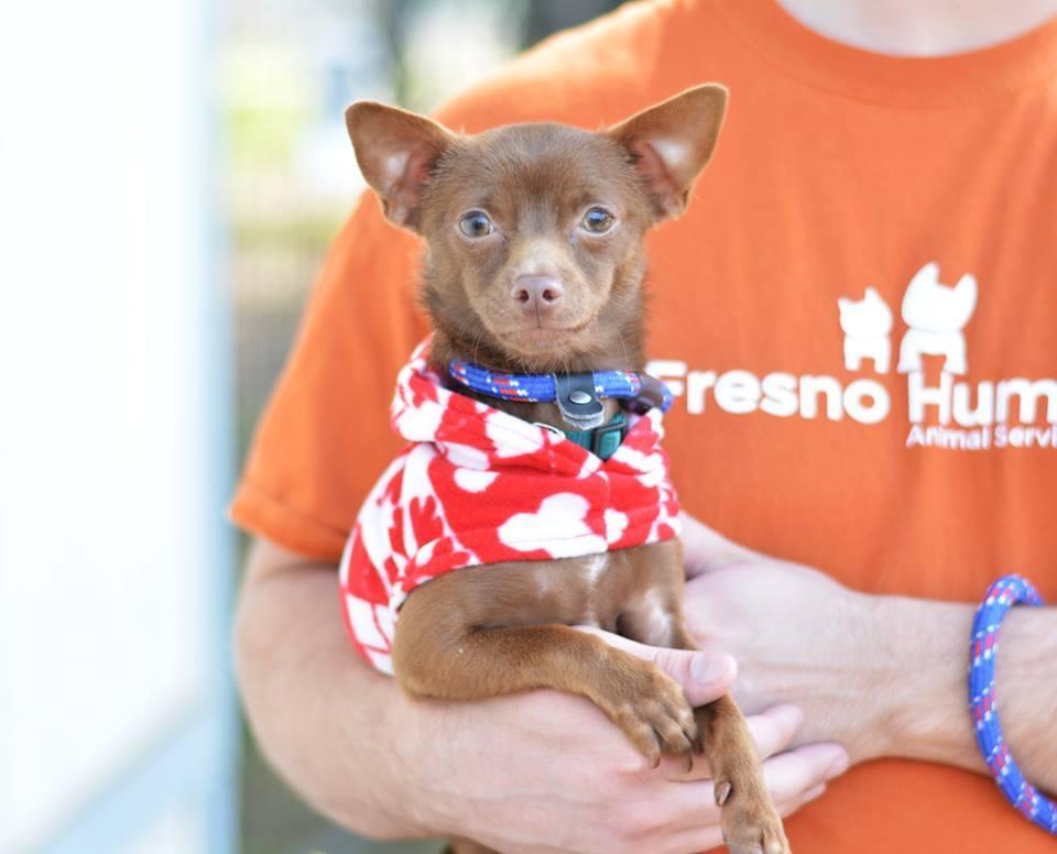 Fresno Humane Animal Services