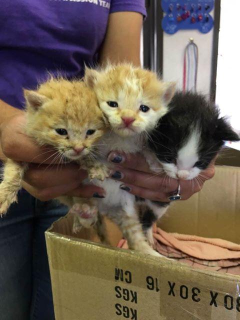 10 kittens weaning... -