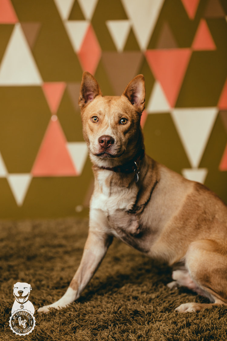 Our Stories — Fresno Humane Animal Services
