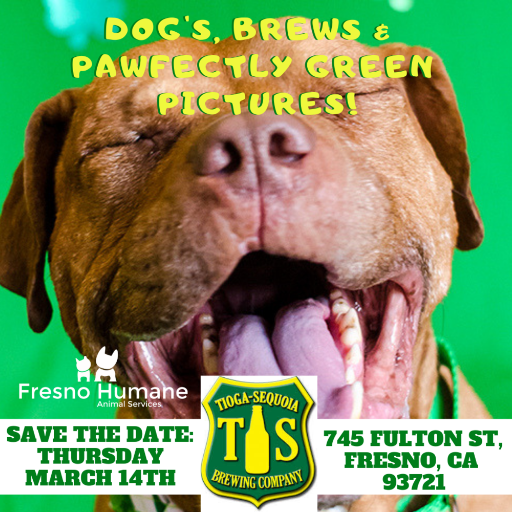 Dogs, Brews & Pawfectly Green Pics (1).png