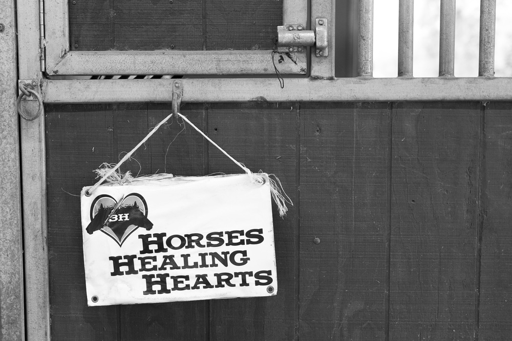Horses Healing Hearts // Ashley Petersen Photography