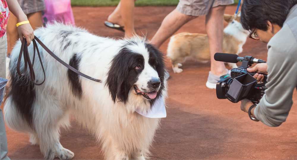 A Lucky Dog giving an interview at Dog Day at the Park // Ashley Petersen Photo