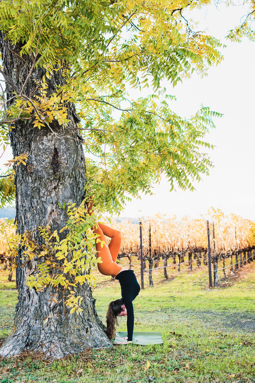 Hollow Back Handstand in Napa // Ashley Petersen Photo
