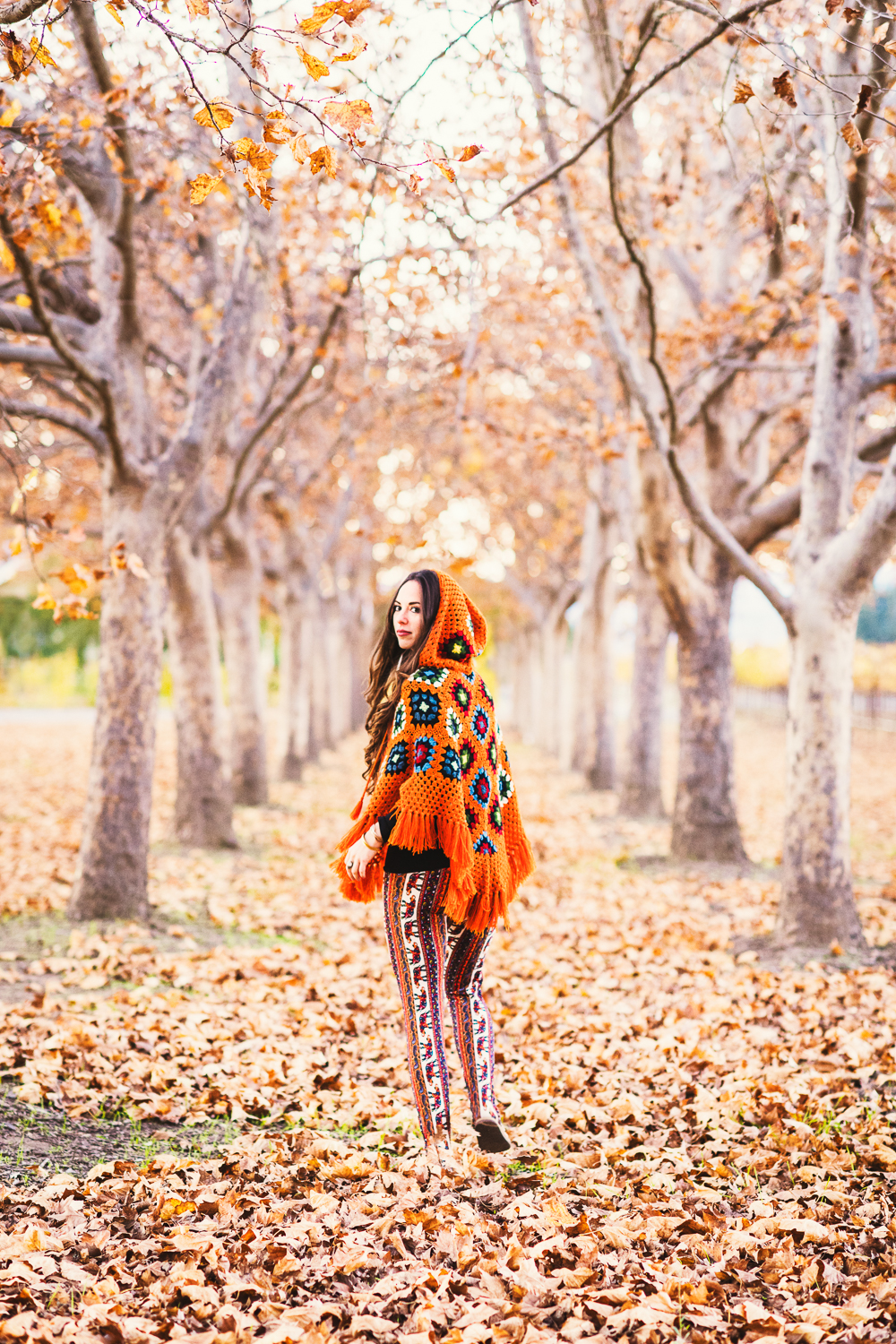 Napa in fall // Ashley Petersen Photo