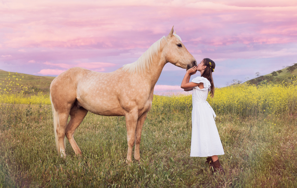 Grady the rescued horse //  Rescue Tales  // Ashley Petersen Photography