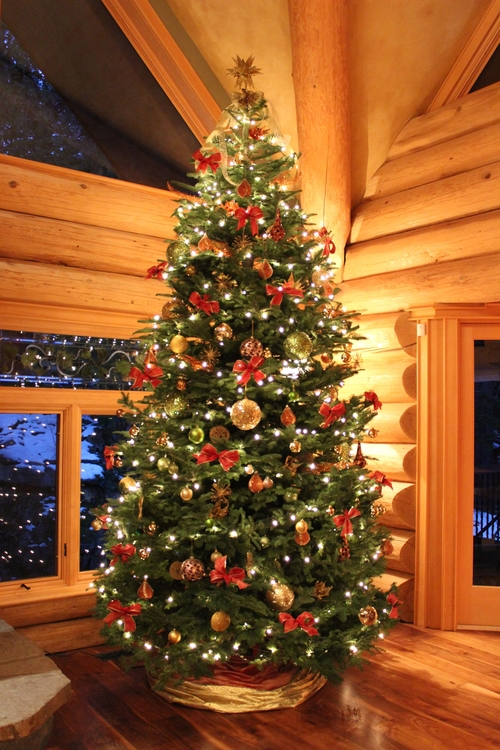 christmas trees rental dec 2223 sold out only dec 24th available