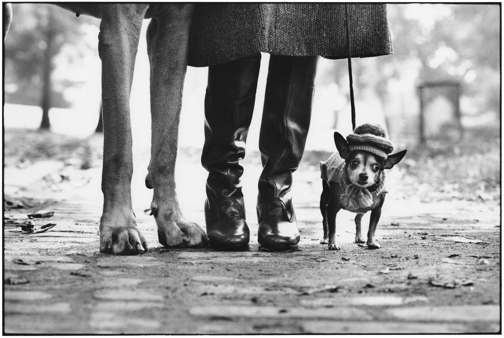 Felix, Gladys And Rover, New York, 1974   銀鹽影像