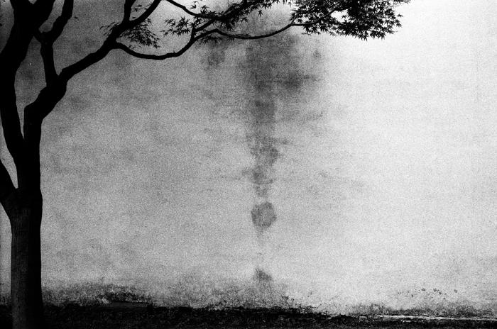 園林裡的枝干二 蘇州拙政園 2015年春  28 x 35.5 厘米/ 51 x 61 厘米