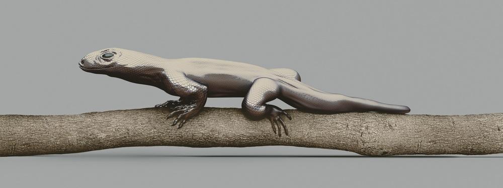巨蜥 [Varanus imitabilis]    120 x 45  厘米