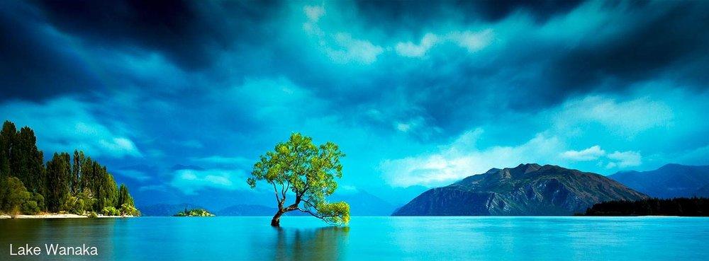 Lone tree, Wanaka