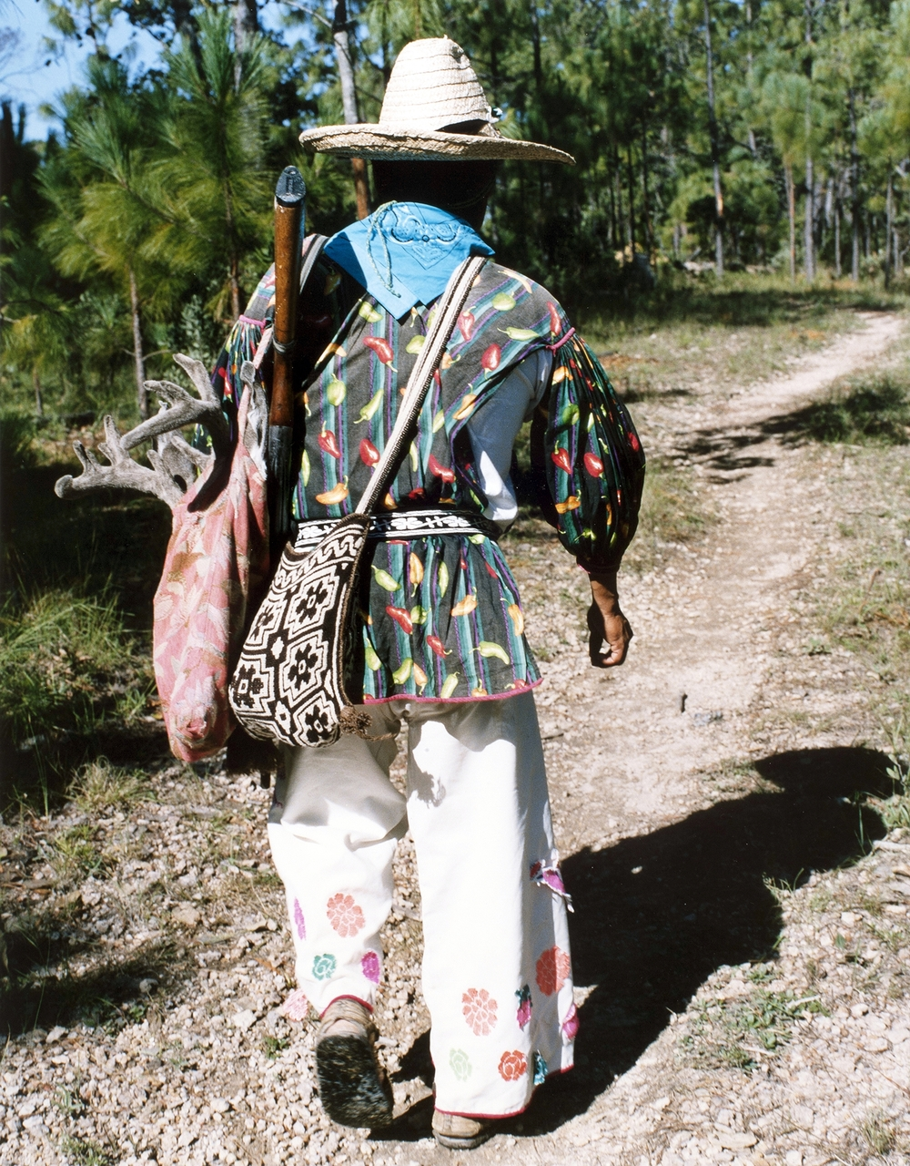 Don Alexandro, a huichiol native, entering the forest
