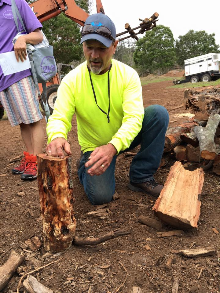 The farm manager shows us variations of wood that are classified in terms of how much oil they will produce.