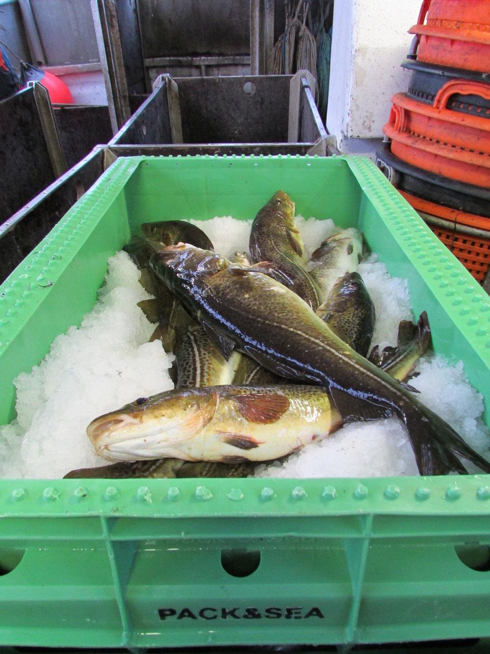 BUYING FRESH FISH