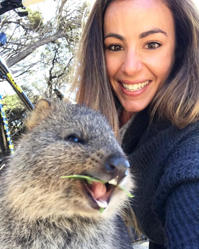Say hello to my little friend.. and The Pink Ladies! . . . . . . . #rottnest #rottnestisland #rottnestislandwa #quokka #quokkaselfies #quokkalove #quokkasmile #wa #perth