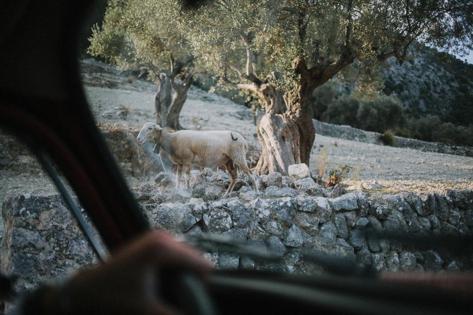 Fran-Rosa-Boda-Mallorca069.jpg
