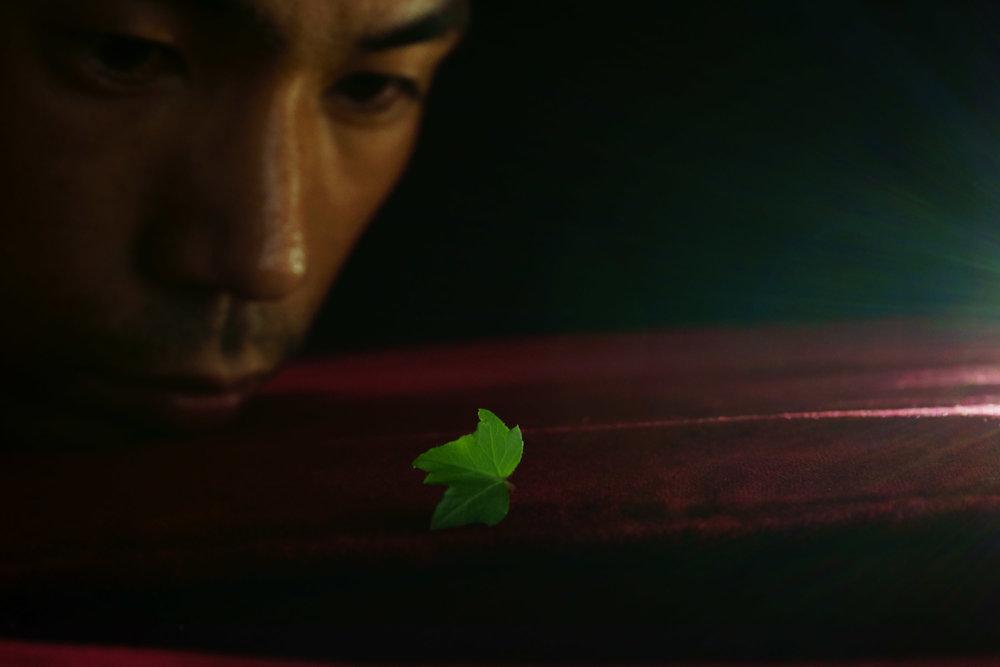 finding_a_leaf.jpg