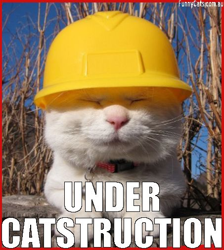 cat-catstruction-play-on-words-construction-cats-Favim.com-4174852.jpeg
