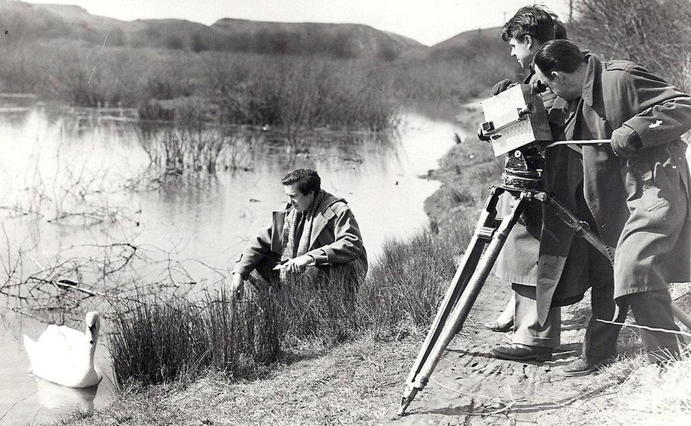 2 LOOK swans BTO survey 1955.jpg