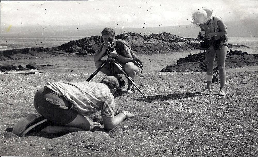 Digging for iguana eggs...