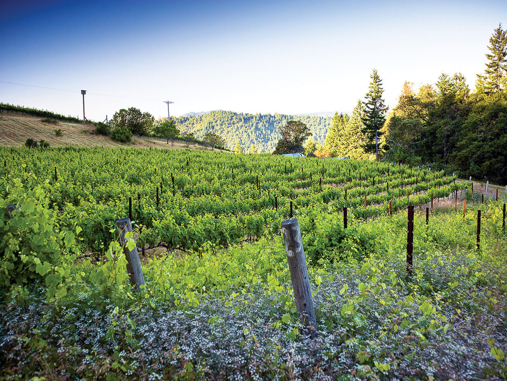 HUmboldt County Vineyard