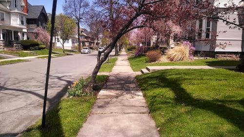 rochester-spring