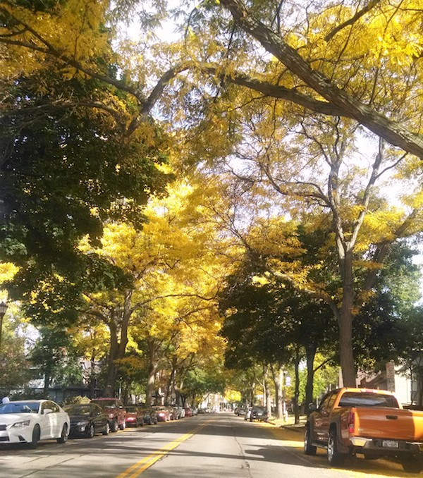 yellow-trees-rochester