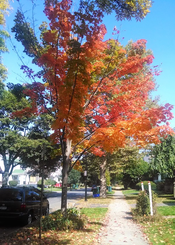 red-tree-rochester