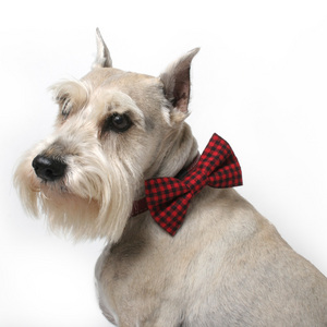 Black and Red Gingham Dog Bowtie.jpg