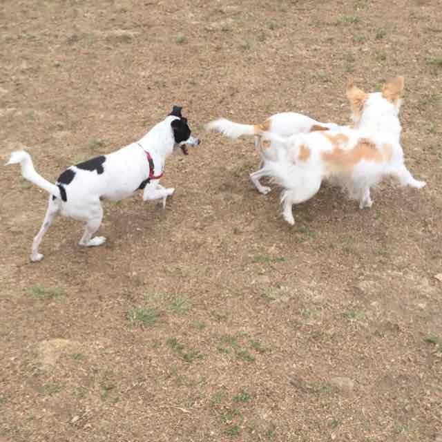 Dog park chase 2.jpg