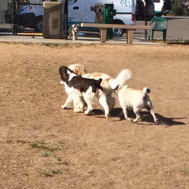 Dog Park 11.jpg