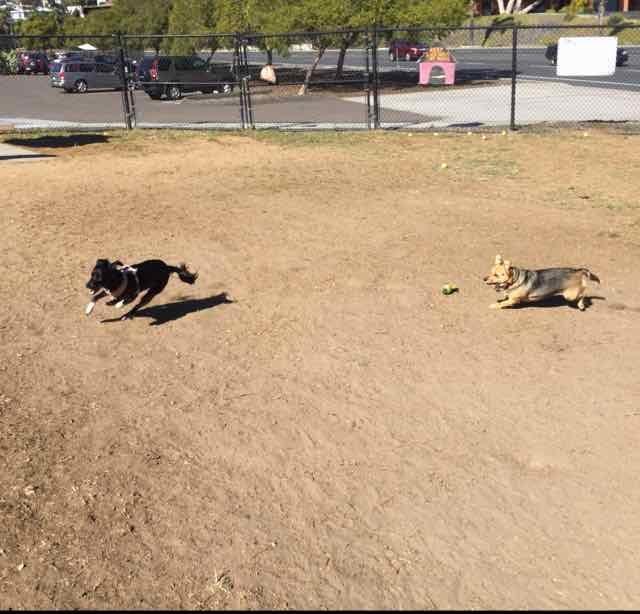 Dog park 10.jpg