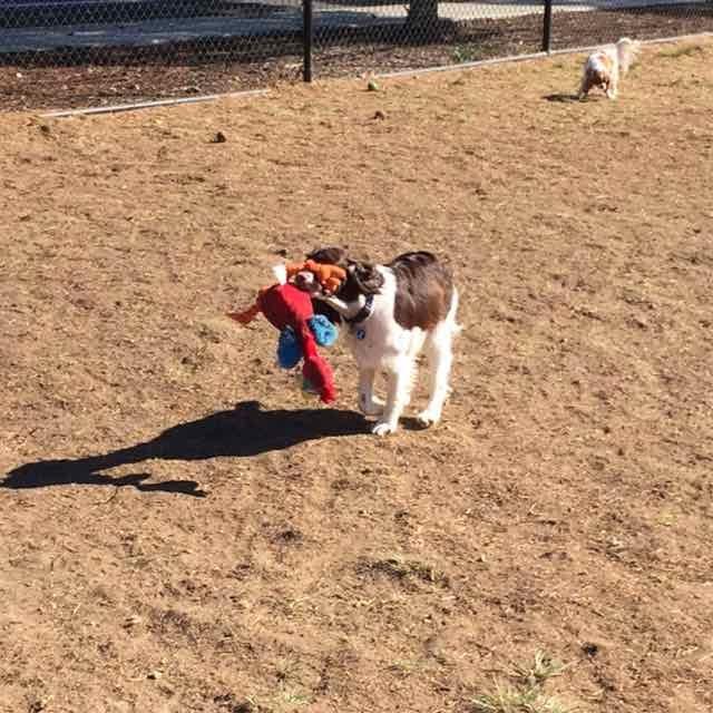 Dog park toy.jpg