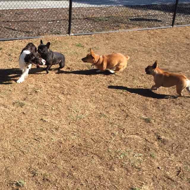 Dog Park 8.jpg
