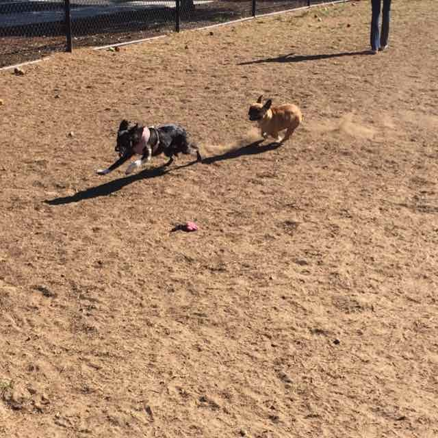 Dog Park chase 1.jpg