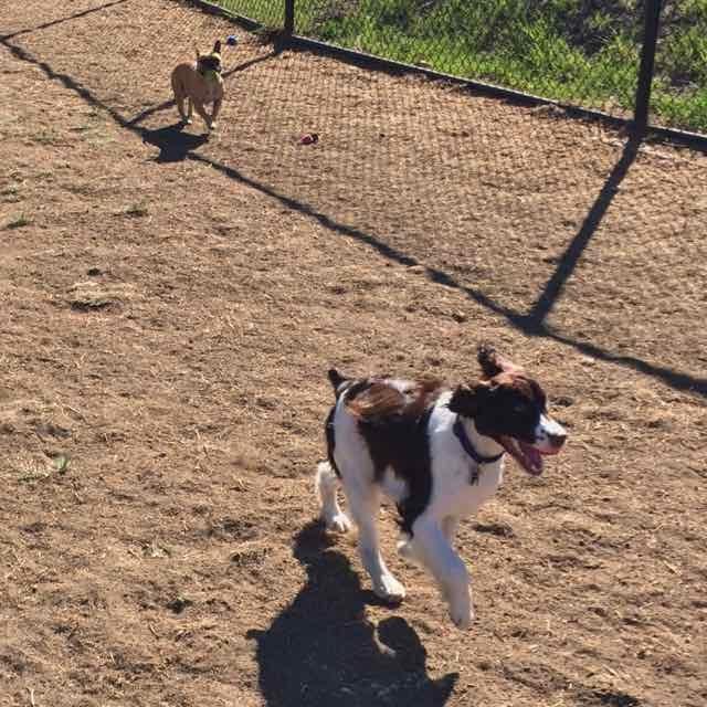 Dog Park 7.jpg
