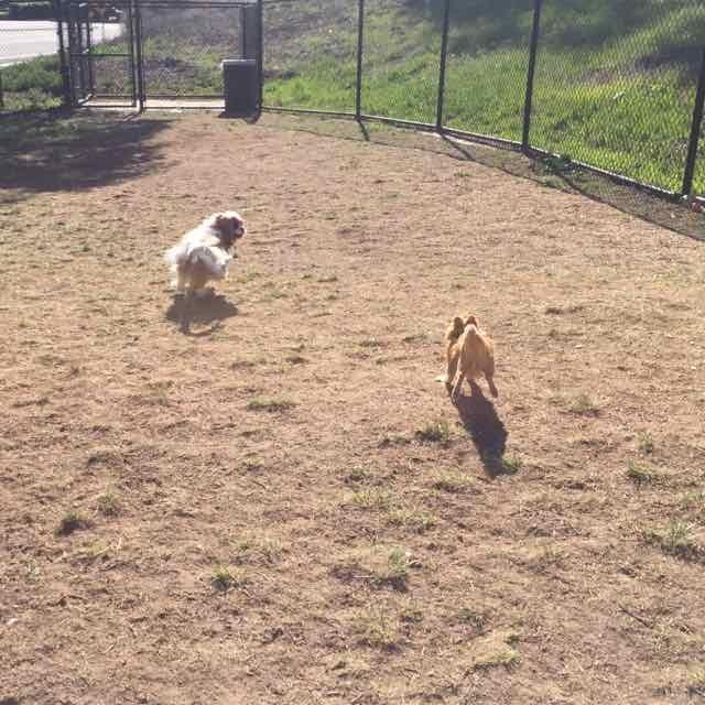 Dog Park 4.jpg