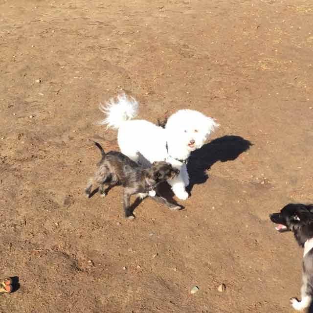 Dog Park 3.jpg