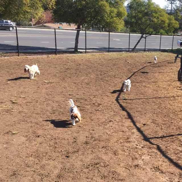 Dog Park Dogs 1.jpg