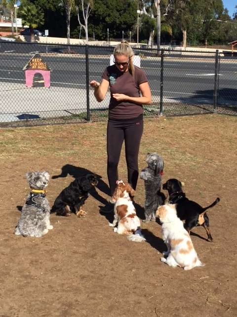 Brandi working with our zen small dog park group