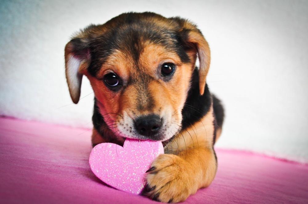 Image result for February dog