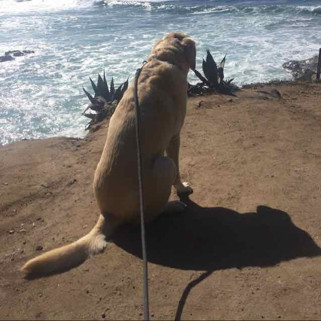 dog ocean overlook.jpg