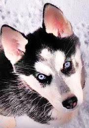 Evey puppy.jpeg