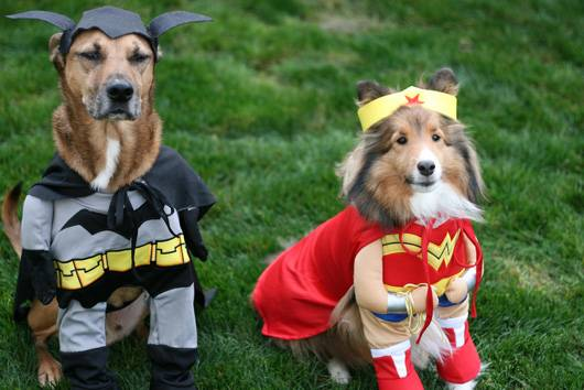 pet_superhero.jpg