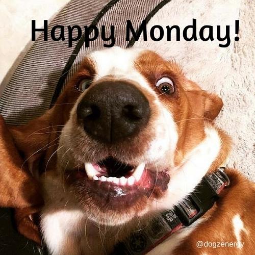 Happy Monday!.jpg