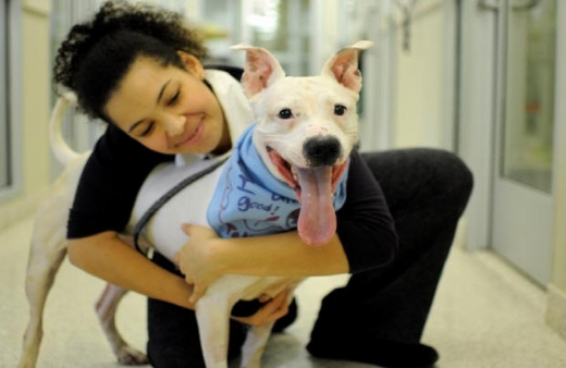 holiday-dog-adoption.JPG