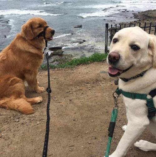 Duke and Olivia .jpg